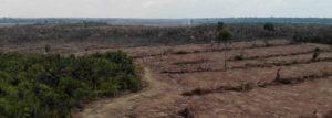 Regenwaldzerstörung Sojaanbau in Brasilien (c) Nikolaus Tarouquella